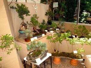 La casa del bonsai for Viveros en capital federal